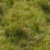 Naadloze Textuur van grasland Stock Fotografie