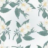 Naadloze textuurjasmijn en van de knoppenlente bloemvector Stock Afbeeldingen