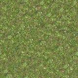 Naadloze Tileable-Textuur van Forest Lawn Stock Fotografie