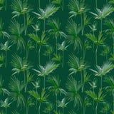 Naadloze Tropische Palmbladenachtergrond Exotische de Zomertextuur Royalty-vrije Stock Afbeelding