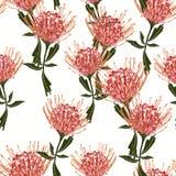 Naadloze tropische protea bloeit patroon met groene bladeren op witte achtergrond royalty-vrije illustratie