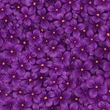 Naadloze vectortextuur van bloeiende purpere sering Stock Fotografie
