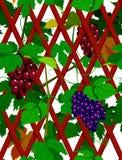 Naadloze wijnstok Stock Foto's