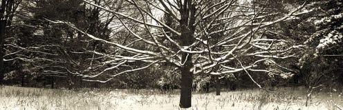 Naakt sneeuwde boom Royalty-vrije Stock Foto's