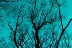 Naakt takkensilhouet tegen cyaan blauwe hemel stock foto's