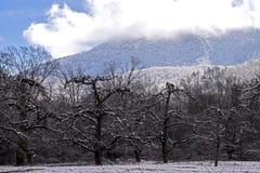 Naakte Apple-Bomentribune onder een sneeuw behandelde berg Stock Fotografie