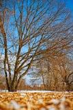 Naakte bomen Royalty-vrije Stock Fotografie