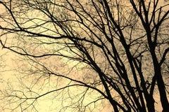 Naakte bomen Royalty-vrije Stock Afbeelding