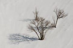Naakte bomen Stock Afbeelding