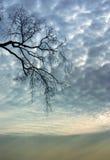 Naakte bomen Stock Foto