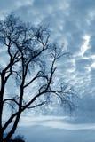 Naakte bomen Stock Fotografie