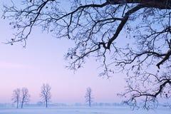 Naakte Bomen Royalty-vrije Stock Foto