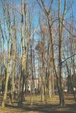 Naakte bomen Stock Foto's