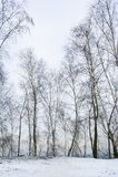 Naakte bomen royalty-vrije stock afbeeldingen