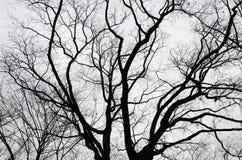 Naakte bomen in de bewolkte hemel Stock Foto