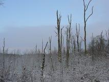 Naakte bomen in de sneeuw Royalty-vrije Stock Foto's