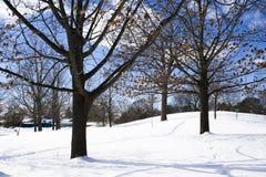 Naakte bomen in de winter Royalty-vrije Stock Fotografie