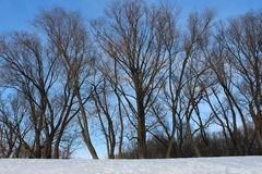 Naakte bomen in de winter Stock Afbeeldingen