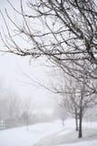 Naakte bomen in de wintermist Stock Foto's