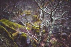 Naakte bomen in het bos met stenen Royalty-vrije Stock Fotografie