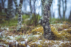 Naakte bomen in het bos met stenen Royalty-vrije Stock Foto