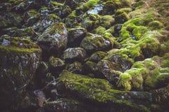 Naakte bomen in het bos met stenen Royalty-vrije Stock Afbeelding