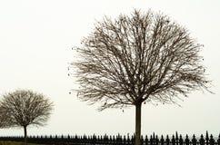 Naakte bomen met een ronde kroon Stock Afbeelding