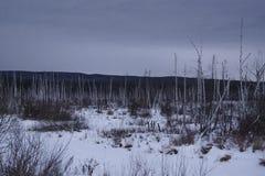 Naakte bomen in open stock afbeeldingen