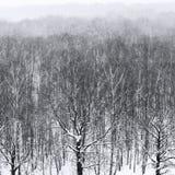 Naakte bomen in sneeuwval in bos in de winter Royalty-vrije Stock Foto