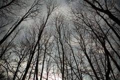 Naakte bomen tegen hemel Royalty-vrije Stock Fotografie