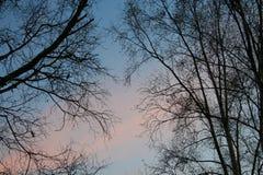 Naakte boom bij zonsondergang Royalty-vrije Stock Afbeelding