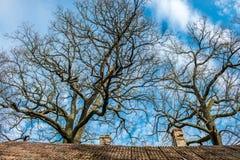 Naakte boom blauwe hemel Stock Fotografie
