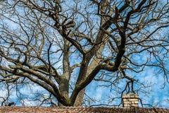 Naakte boom blauwe hemel Stock Foto