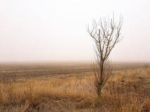 Naakte boom in de mist Royalty-vrije Stock Afbeeldingen