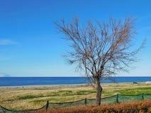 Naakte boom dichtbij het overzees Stock Foto's