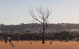 Naakte boom in een moeras met vogels die op takken zitten Royalty-vrije Stock Foto's