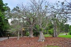 Naakte boom met gevallen bladeren Stock Foto