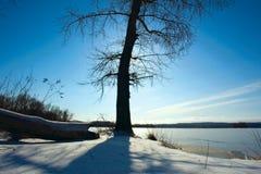 Naakte boom tegen zon in de winter Royalty-vrije Stock Foto