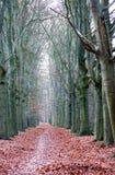 Naakte de herfstbomen Stock Afbeeldingen