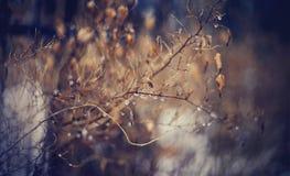 Naakte de herfsttakken in dalingen Royalty-vrije Stock Foto's