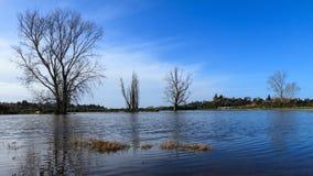 Naakte de winterbomen die zich op een overstroomd gebied bevinden stock afbeelding