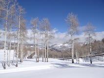 Naakte de winterespen tegen een blauwe hemel Royalty-vrije Stock Foto