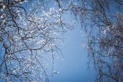 Naakte die boomtakken met sneeuw tegen blauwe hemel worden behandeld royalty-vrije stock afbeelding