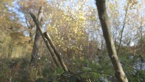 Naakte en gehakte takken in het bos stock footage