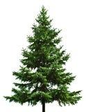 Naakte Kerstboom Stock Afbeelding