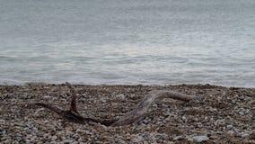 Naakte tak van de boom die in het kiezelsteenstrand leggen stock afbeelding