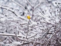 Naakte takken in de sneeuw royalty-vrije stock fotografie