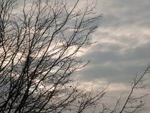 Naakte takken op achtergrond van de de herfst de donkere hemel Royalty-vrije Stock Fotografie