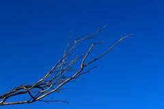 Naakte Takken tegen de Hemel van Blauw Stock Afbeeldingen