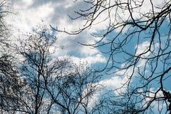 Naakte takken van bomen tegen de mooie de lentehemel royalty-vrije stock foto's